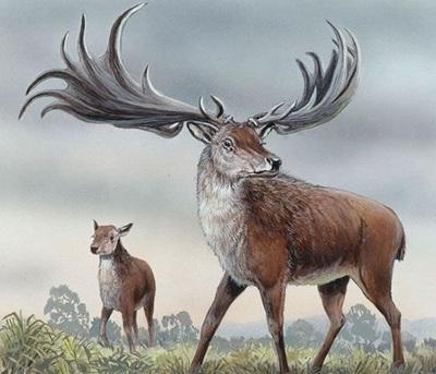 人类灭绝之后的动物-爱尔兰鹿